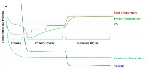 Freeze Drying Cycle Graph