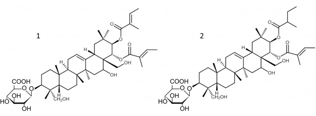 Fig 5. Chemical structures of hSGLT inhibitors gymnemic acid V (1) and gymnemic acid XV (2).